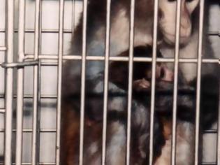 Φωτογραφία για Η μάχη για τα πειραματόζωα και τα δικαιώματα των ζώων...