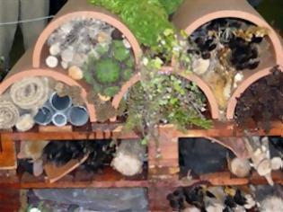 Φωτογραφία για Πώς να απομακρύνετε τα έντομα από το σπίτι