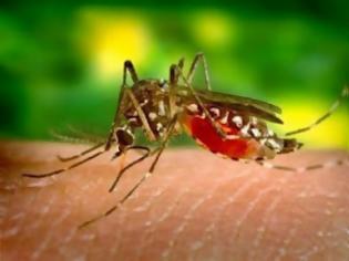 Φωτογραφία για SOS-Το ΚΕΕΛΠΝΟ προειδοποιεί για περισσότερα κρούσματα από τον ιό του Δυτικού Νείλου!