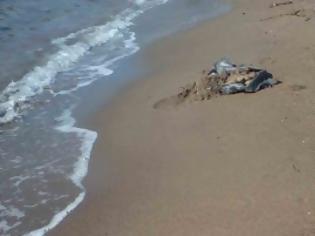 Φρίκη στο Ναύπλιο: Έπνιξαν κουτάβια στην παραλία!