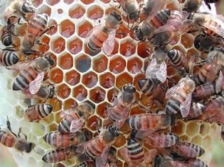 Φωτογραφία για Γιατροσόφια με μέλι