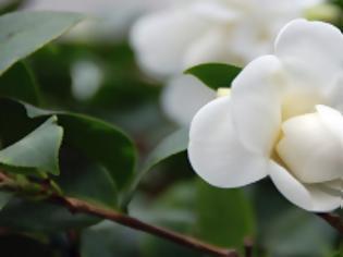 Φωτογραφία για Απίστευτο: Λουλούδι εκσπερματώνει ακριβώς όπως οι άνθρωποι