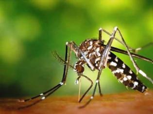 Φωτογραφία για «Γιατί είμαι... μαγνήτης για τα κουνούπια»;