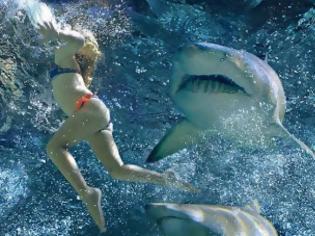 Φωτογραφία για ΣΟΚ: Την κατασπάραξε καρχαρίας λίγο πριν βγει από την θάλασσα