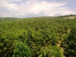 Φωτογραφία για Ξενοδοχεία, εργοστάσια και δρόμους στα δάση προβλέπει το νέο νομοσχέδιο