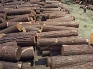 Φωτογραφία για Η κρίση «πληγώνει» τα δάση